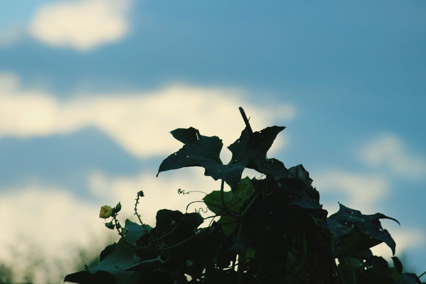 Some kind of tree..... Hobby Photography Love To Capture Taking Photos Fresh Sky And Clouds Blue