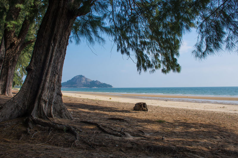 Beach Beauty In Nature Day Horizon Over Water Land Nature No People Non-urban Scene Outdoors Plant Sand Scenics - Nature Sea Sky Tranquil Scene Tranquility Tree Tree Trunk Trunk Water