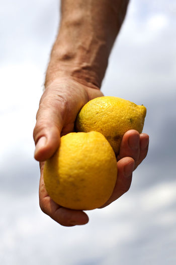 Hand holding two organic lemons. Adult Citrus Fruit Close-up Cloud - Sky Day Freshness Healthy Eating Healthy Lifestyle Holding Human Body Part Human Hand Lemon Nature One Man Only One Person Outdoors Sky Vertical Yellow