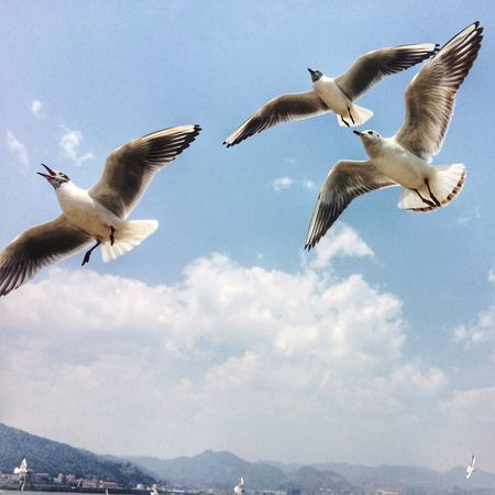 Dianchi side groups of seagulls. Traveling Enjoying Life Beautiful Day Hello World Quality Time Photo By IPhone 昆明滇池海埂大坝