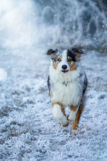 Animal Themes Cold Temperature Day Dog Domestic Animals Mammal Nature No People One Animal Outdoors Pets Portrait Snow Water Winter