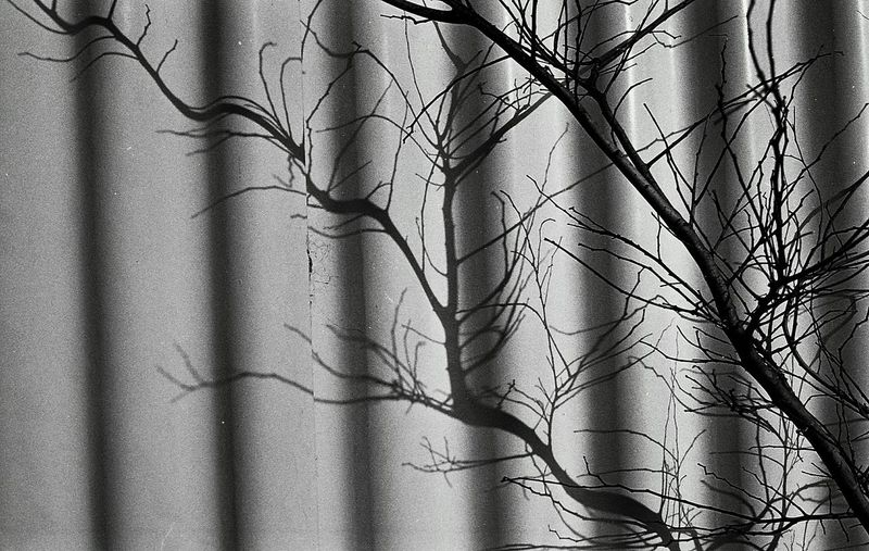 Tree Day Bnw Snap Black & White Monochrome Black And White Photography Filmcamera Film Blackandwhite Photography Snapshots Of Life Black And White Life Film Photography Leica Black And White Silhouette Tree