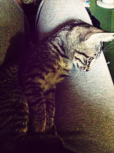 Tigerlili Sunday Morning Sleep Keepcool