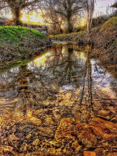 Water Nature Reflection Tranquility Outdoors Day No People Tree Landscape Forest Beauty In Nature First Eyeem Photo