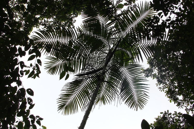 Giant fern. Helecho gigante del subtrópico Backgrounds Beauty In Nature Day Fern Giant Fern Leaf Low Angle View Nature Scenics Tall - High Tranquil Scene Tranquility
