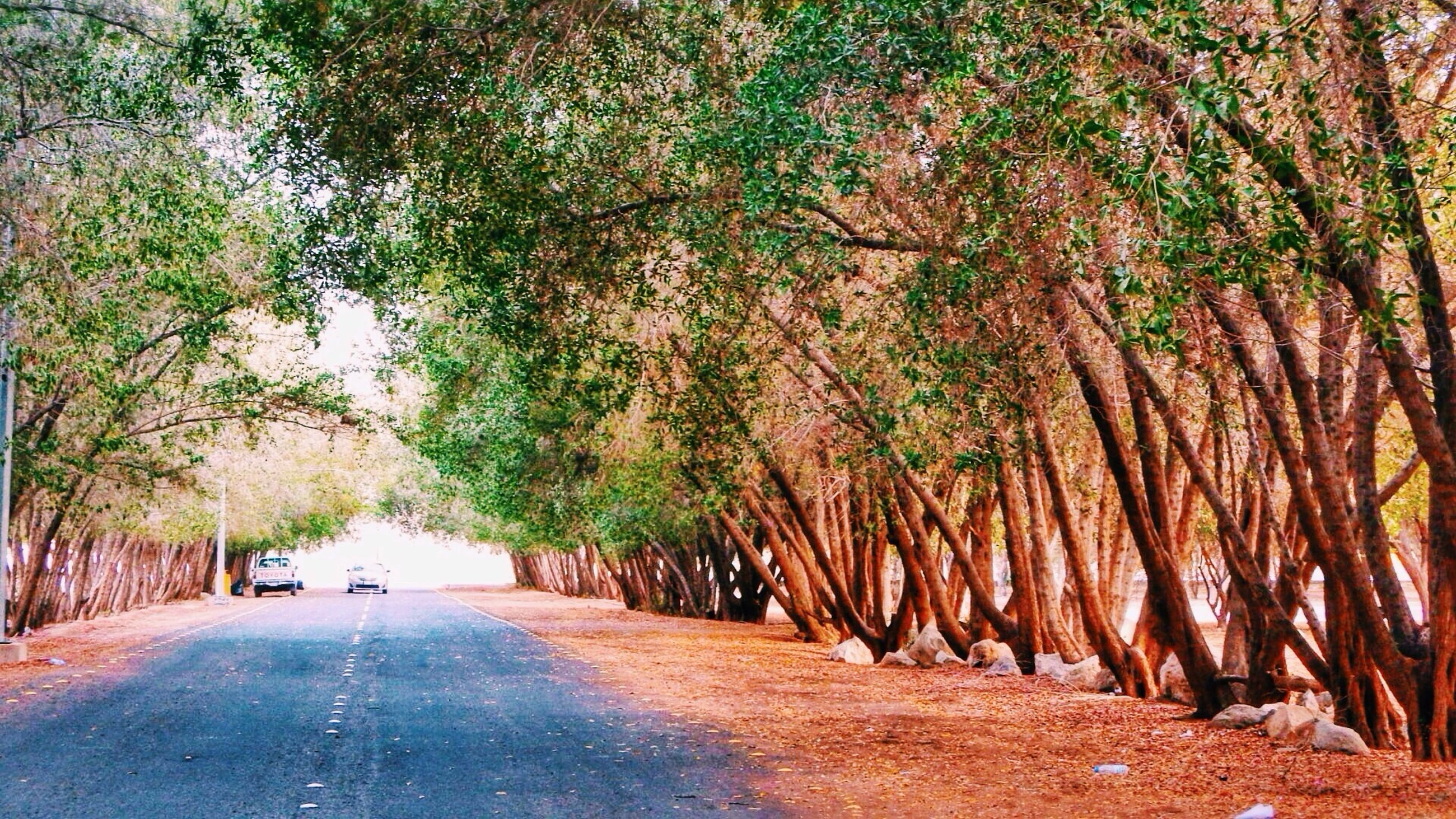 tree, the way forward, diminishing perspective, treelined, road, growth, vanishing point, footpath, street, transportation, tranquility, green color, nature, tree trunk, empty road, empty, branch, walkway, tranquil scene, in a row
