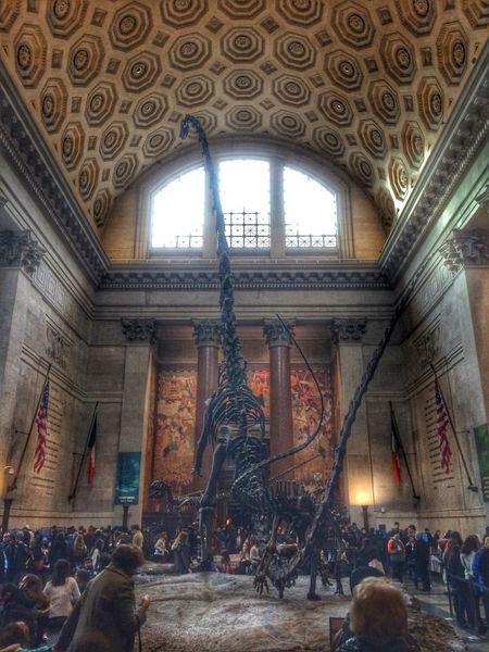 American Museum Of Natural History Dinosaur New York Bones Museum Places My Daughter Loves Brontosaur Fun Amazing Science