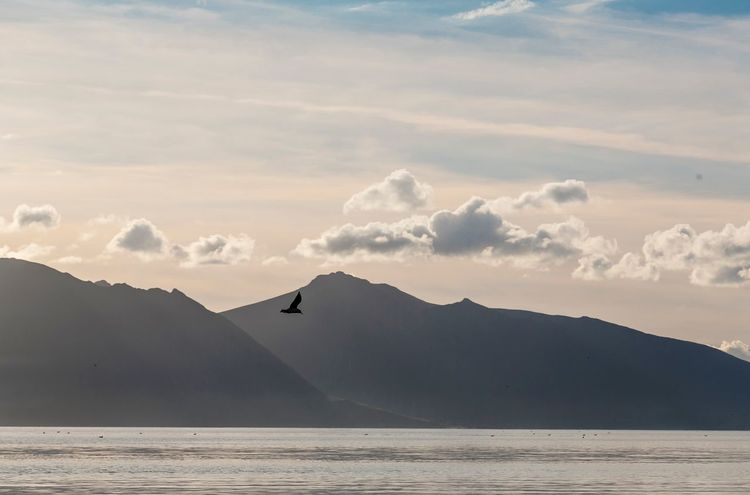 Mountain Scotland Pastels Pastel Sky Scotland 💕 Eyeem Scotland  Arran  Escape Water Beauty In Nature Nature Landscape Tranquil Scene Sky Peace Relax Outdoors Recharge Chill Remote Clear Sky Bird Fly Escape From Reality Wings