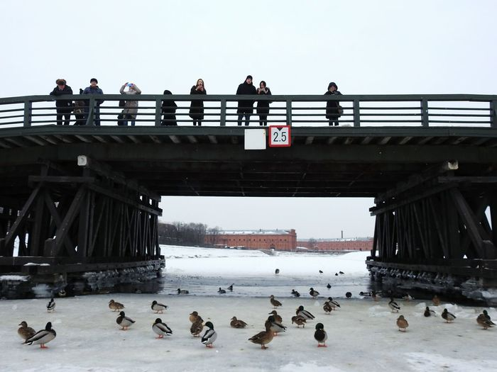 Кронверкский мост Underbridge Kronverkskii Canal River Birds🐦⛅ On Ice Ice People Zayachy Island Duck Ducks Bridge - Man Made Structure Bridge Sankt-Petersburg Russia Colors Of Sankt-Peterburg Sankt-peterburg Winter Snowing Walking Around Bird