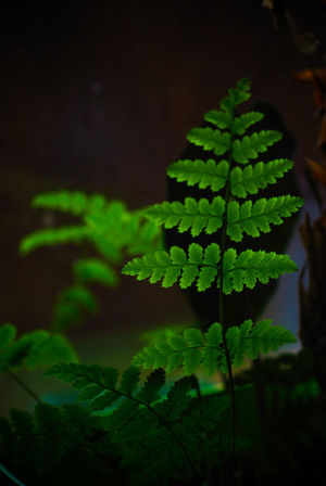 Beauty In Nature Black Background Close-up Focus On Foreground Fragility Freshness Green Color Growth Nature No People Outdoors Plant Plant Part Plant Stem Selective Focus Vulnerability
