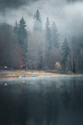 Tree Water Reflection Plant Tranquil Scene Tranquility Lake Nature Beauty In Nature Fog Scenics - Nature Day Waterfront Sky No People Outdoors Land Forest Boats Tranquility Foggy Weather Peer Nautical Vessel Reflection Tree
