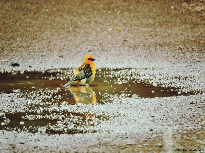 Oiseau Bird Nature Gotoreunion Reunionisland 🌴 Iledelareunion Photography Photosplaisirs