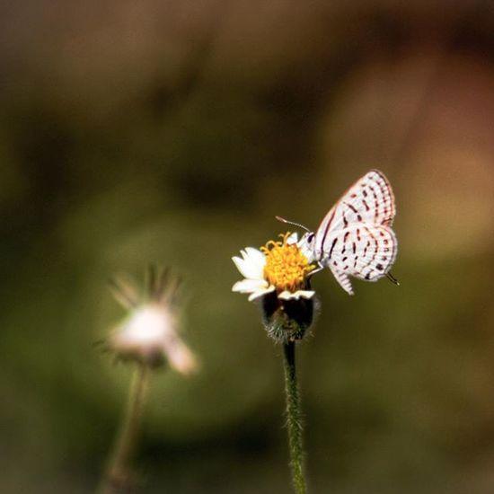 Little Butterfly Wild Beautiful Design Patterns Wonders Nature Thane Pw_mumbai Pw_camouflageblend India Needs identification on species name