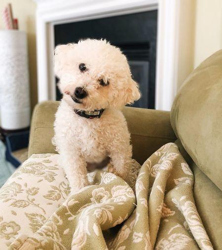 Portrait of dog sitting on carpet at home