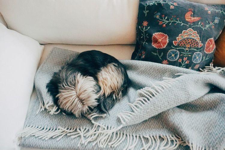 High angle view of dog sleeping on sofa at home