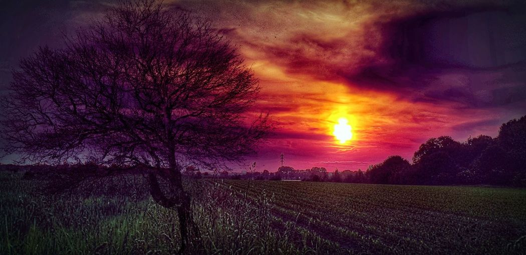 A photograph is the pause button of life 💕 Recharge Energy Dreaming Dream A Little Dream Field When The Sun Goes Down..♥ Nature EyeEm Best Shots EyeEm Nature Lover Beauty In Nature Slow Motion Eye4photography  Creativity Colorful Tree Flower Agriculture Purple Field Dramatic Sky Sun Romantic Sky Moody Sky Atmospheric Mood Atmosphere Cumulus Cloudscape Agricultural Field The Great Outdoors - 2018 EyeEm Awards The Creative - 2018 EyeEm Awards
