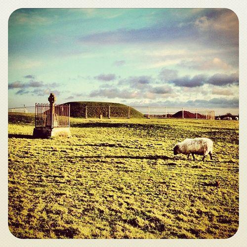 Good Morning ?☀ #decdaily #clouds #earlybirdlove #beautiful_ireland #jj #jj_forum #ireland #hill_of_tara #sheep Clouds Sheep Ireland Jj  Earlybirdlove Jj_forum Decdaily Hill_of_tara Beautiful_ireland