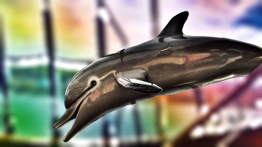 @FrauSchlumpf: erster Versuch! Photo Editing Dolphins Edit This