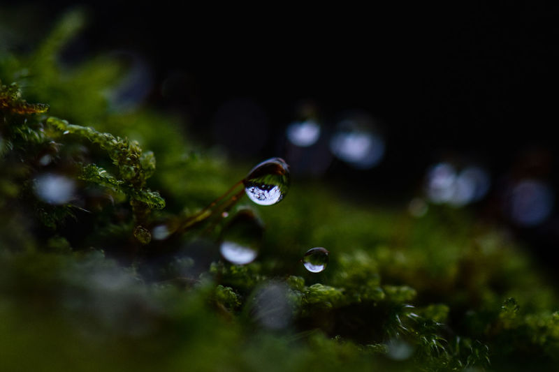 Close-up of water drops on moss
