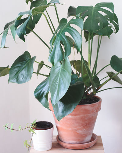 Close-Up Of Potted Plants On Table Against Wall At Home