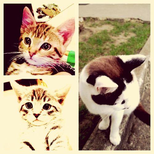 Mes3amours Chat Cat Complicité Family❤