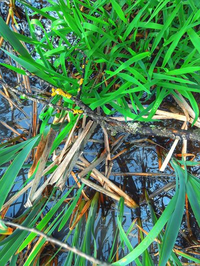 Grasses Pond Shore Nature Patterns Raindrops Water Reflections Green
