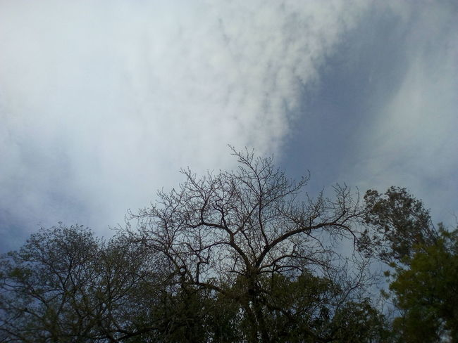 Low Angle View Nature No People Tree Outdoors Sky Day Beauty In Nature Flying Large Group Of Animals Bird Animal Themes Tranquility Bare Tree Branch Scenics