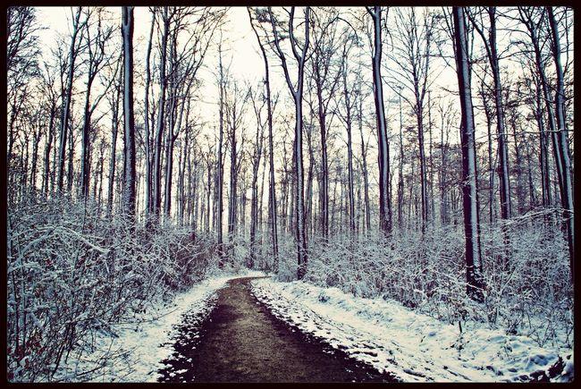 Winter Nature Landscape Salzgitter