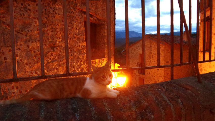 😺 La nuit tous les chats ne sont pas gris ! 🐈 All cats are not grey in the dark! 😼 Cats Cat Chat Chats Peaceful Evening Amazing Place Heartbeat Moments Peaceful Moment Summer2015 Mes Nuits Sont Plus Belles Que Vos Jours