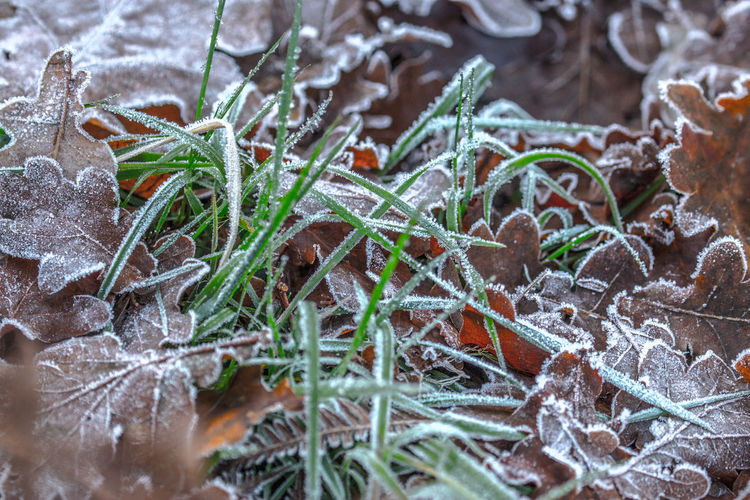 Chilly start Winter Cold Temperature Close-up Plant Leaf Plant Part Green Color No People Nature Selective Focus Snow Ice Frozen Day Growth Food Food And Drink Frost High Angle View Herb Coniferous Tree Jason Gines