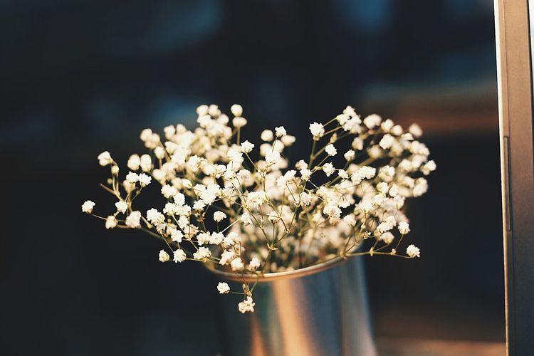 Candid Closeup Indoors  Flowers Babysbreath EyeEmNewHere EyeEmFlower Flowerlovers