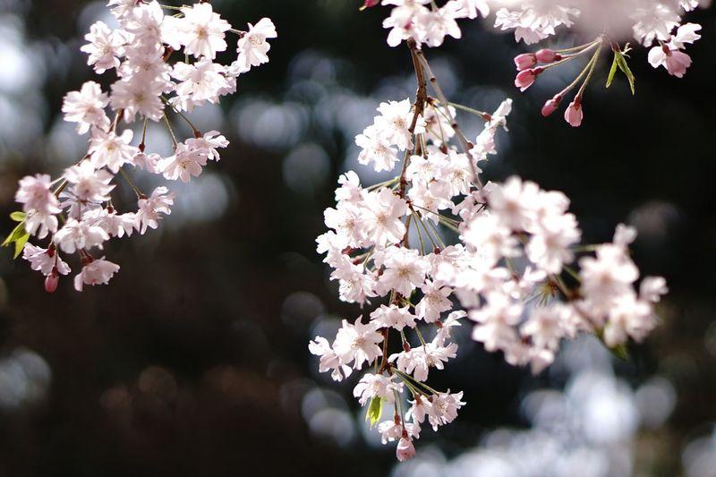 Flowering Plant Flower Fragility Freshness Plant Vulnerability  Beauty In Nature