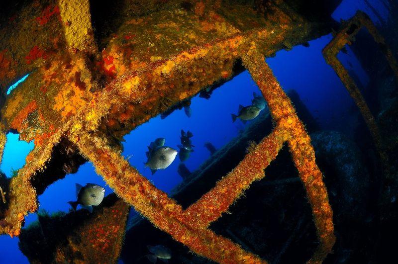 Blue Close-up Diving SCUBA Scubadiving Underwater Photography Underwaterphotography Undewaterseaworld Water Wreck