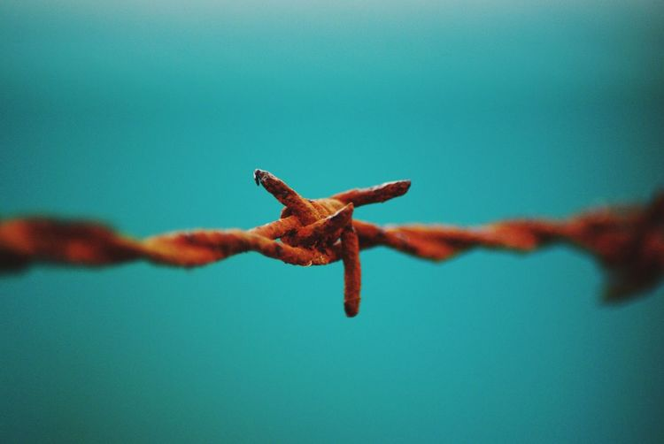 Close-up of rusty barbed wire against clear blue sky