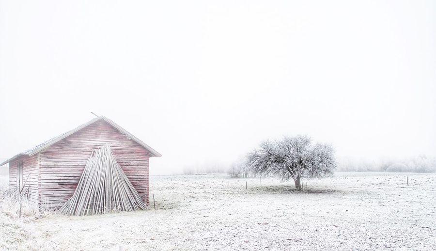 Frozen... Barn