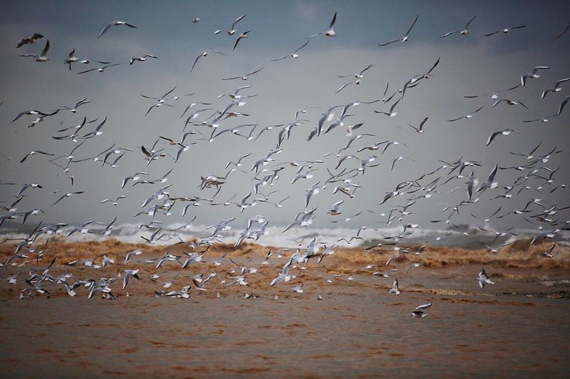 Birds Bird Vertebrate Water Large Group Of Animals Group Of Animals Animal Wildlife Animal Flock Of Birds Animals In The Wild Nature Animal Themes No People Flying Day Land Beauty In Nature Beach Environment Outdoors