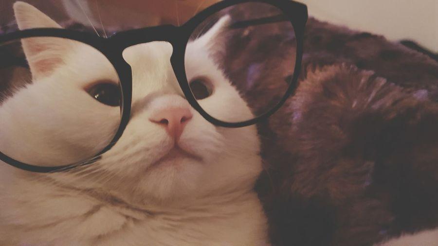 Eyesight Pets