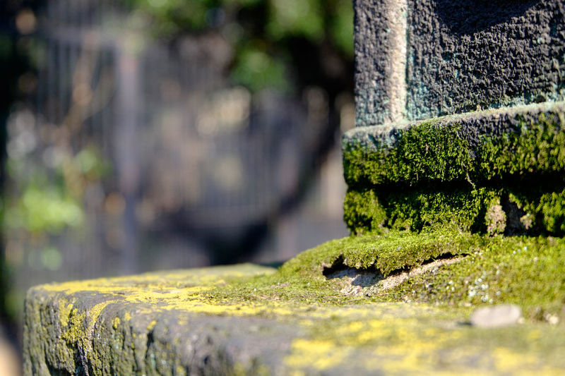 Close-Up Of Moss Covered Seat