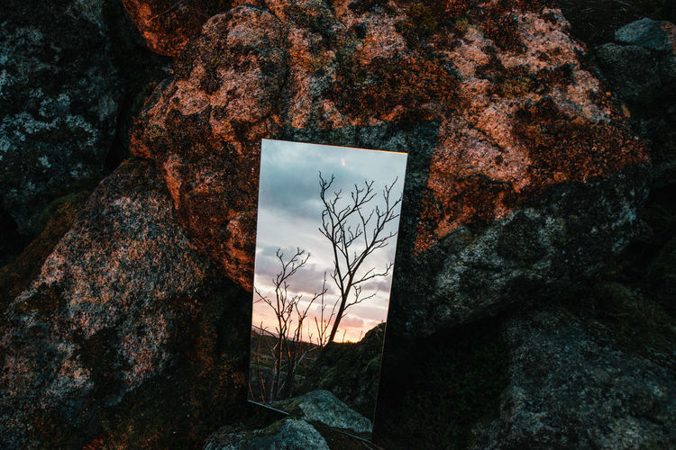 Sunrise Reflected Bare Tree Close-up Conceptual Contemporary Day Mirror Nature No People Outdoors Reflection Rock - Object Sky Sunrise Tree BYOPaper! Fresh On Market 2017