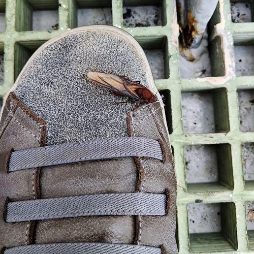 Bug Life Onboard Cargo Ship Shoe Closeup Close-up Shoelace Footwear