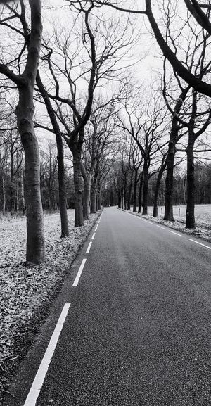 View of empty road along bare trees