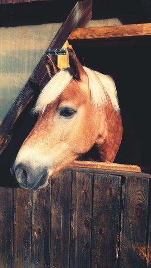 Armani❤ Horse Western Riding Baby Boy