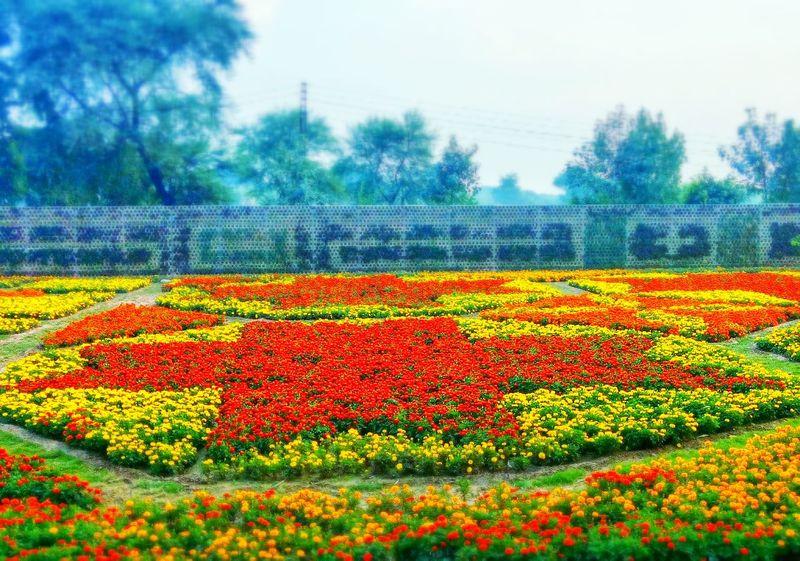 Flowers ❤ Colors