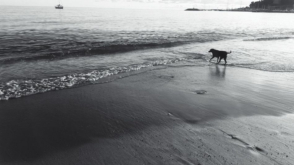 Beauty In Nature Sea Dog Reflection Beach Sand Outdoors Beachphotography Doglover Sand & Sea Alone Alone But Not Lonely Blackandwhite Blackandwhite Photography Black And White Collection  Naturelovers Melancholic Landscapes Melancholic FeelPhotography Feel The Moment Seascape Seascape Photography