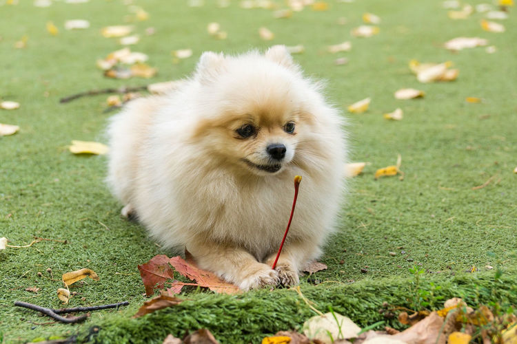 High angle view of puppy on field