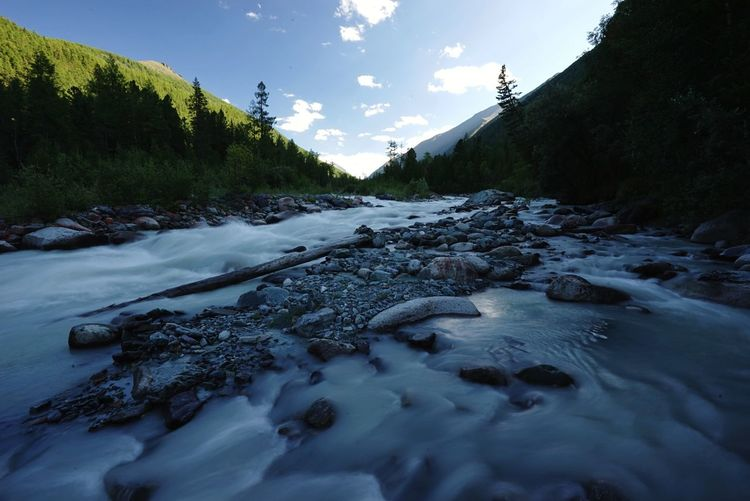 Scenic view of river flowing in forest against sky