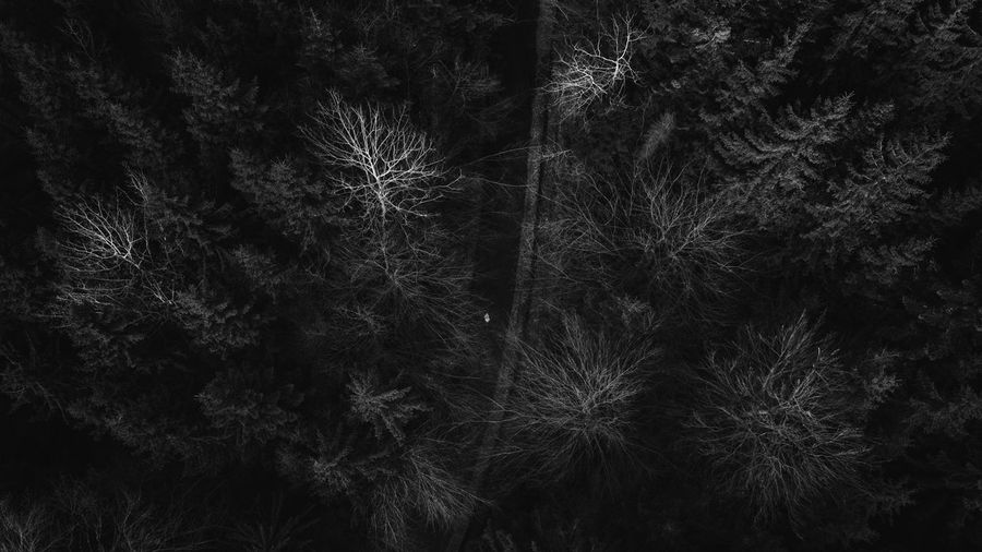 Aerial view of the forest in trees are looking like a neural network from above. Aerial Shot Drone  EyeEm Nature Lover EyeEmNewHere Romania Aerial Aerial Photography Aerial View Backgrounds Beauty In Nature Black And White Blackandwhite Close-up Forest Forest Photography Full Frame Growth Nature Neural Neural Art Neural Fine Art Neuralnetwork No People Outdoors Plant