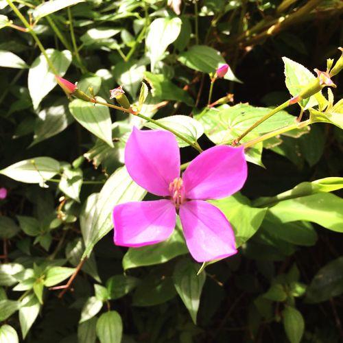 Flower Taking