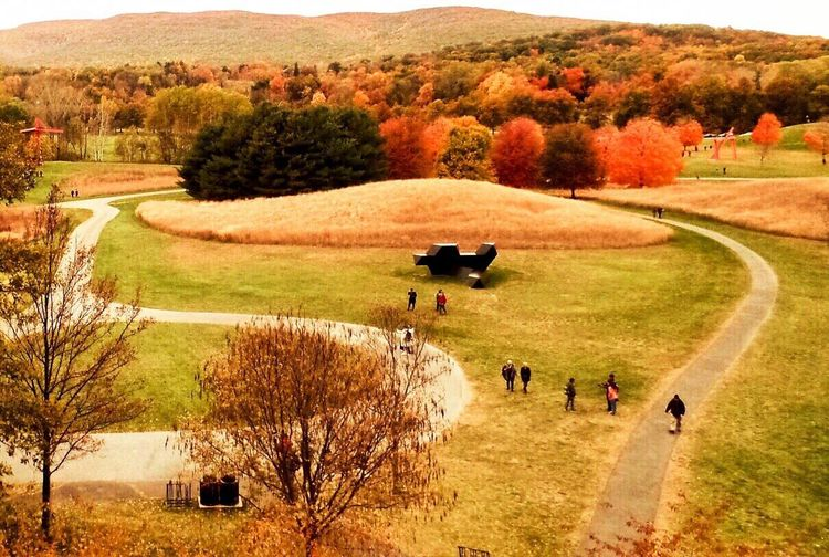 Field Landscape Tree Domestic Animals Mammal Nature Real People Beauty In Nature Livestock Agriculture Day Storm King Arts Center , Cornwall, NY Fall Beauty Pathways Cow Outdoors Grass Men Grazing Rural Scene Standing Farm Animal Outdoor Sculpture Walking Around