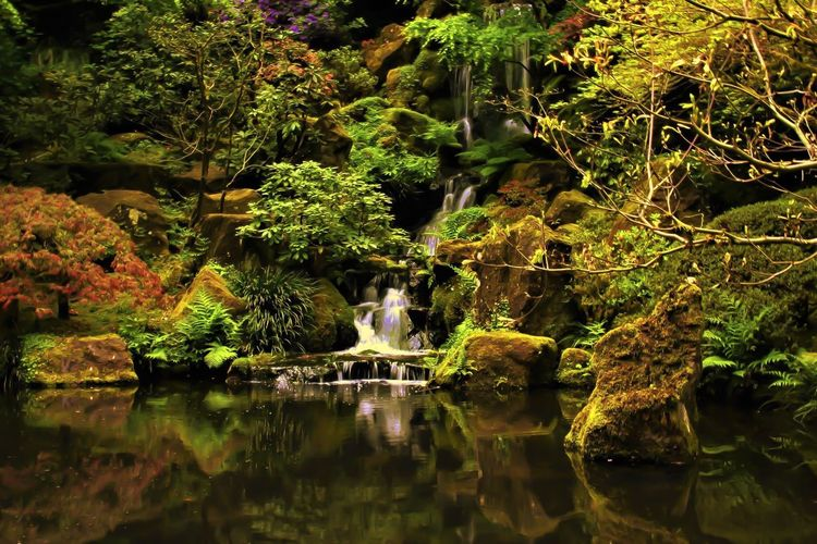 Who needs a tripod, especially for a fee?! Benches will do. No People Outdoors Day Tree Waterfall Waterfront Tranquility Beauty In Nature Statue Nature Reflection Water Japanese Inspired Green